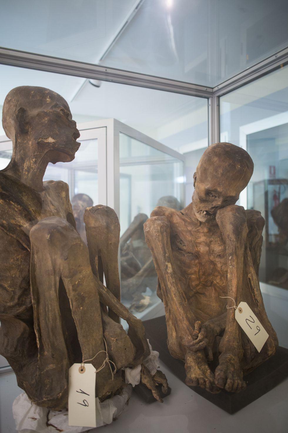 UCM: La Complutense abre sus museos secretos   Madrid   EL PAÍS