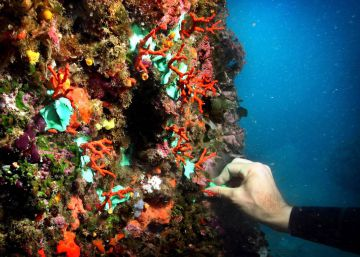 Más de 80 entidades reclaman de nuevo al Estado la protección total del coral rojo
