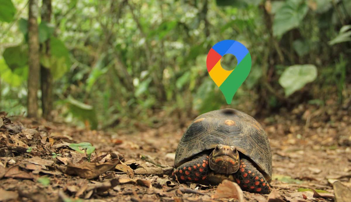 ¿Google Maps te va lento? Así puedes repararlo para que vuelva a funcionar