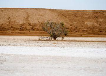 Roberto Bolaño, inventor de desiertos mexicanos