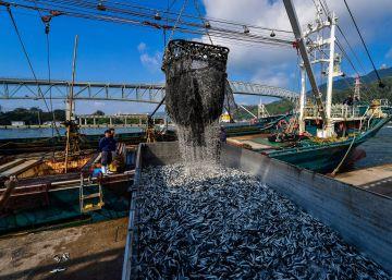 La pesca en alta mar quizá no es tan buen negocio como parece