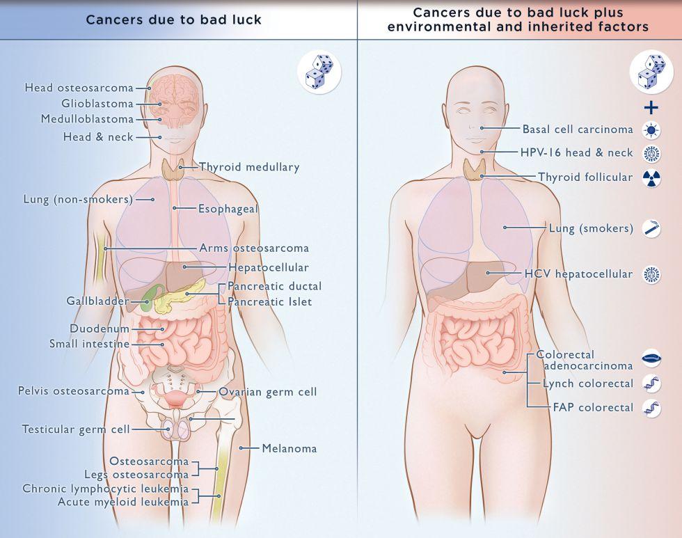 El factor suerte del cáncer | Ciencia | EL PAÍS