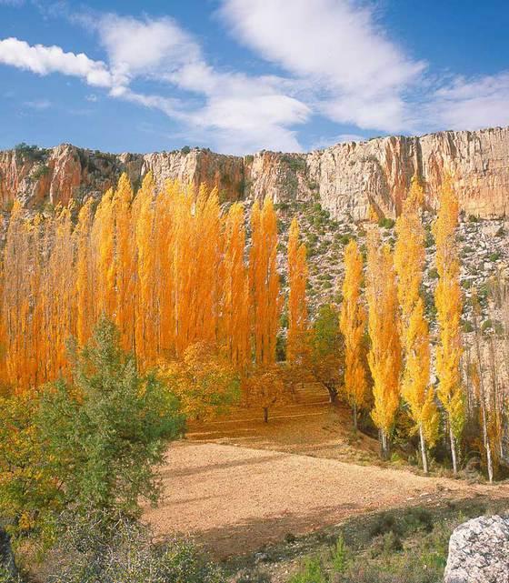 Resultado de imagen de bosques de moratalla