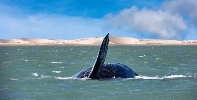 Los océanos se enfrentan a una extinción masiva sin precedentes