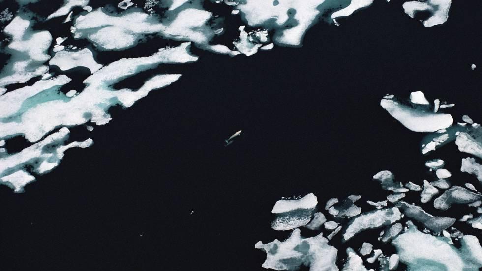 Cambio climático: Un verano sin hielo en el Ártico | Ciencia | EL PAÍS