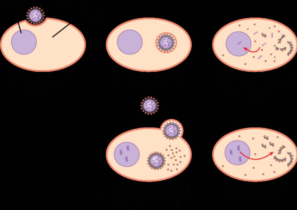 virus seres vivos o muertos