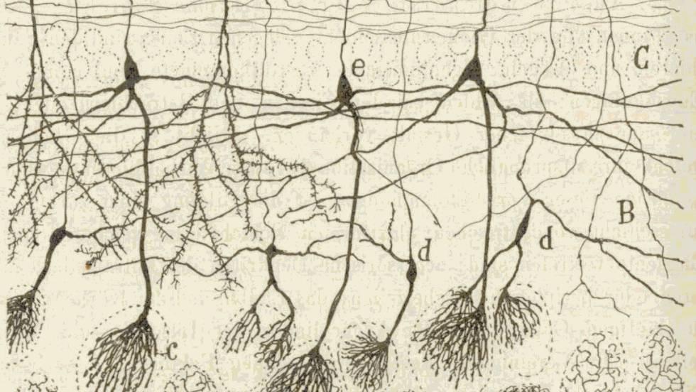 Cajal y sus dibujos un puente fascinante entre la ciencia y el