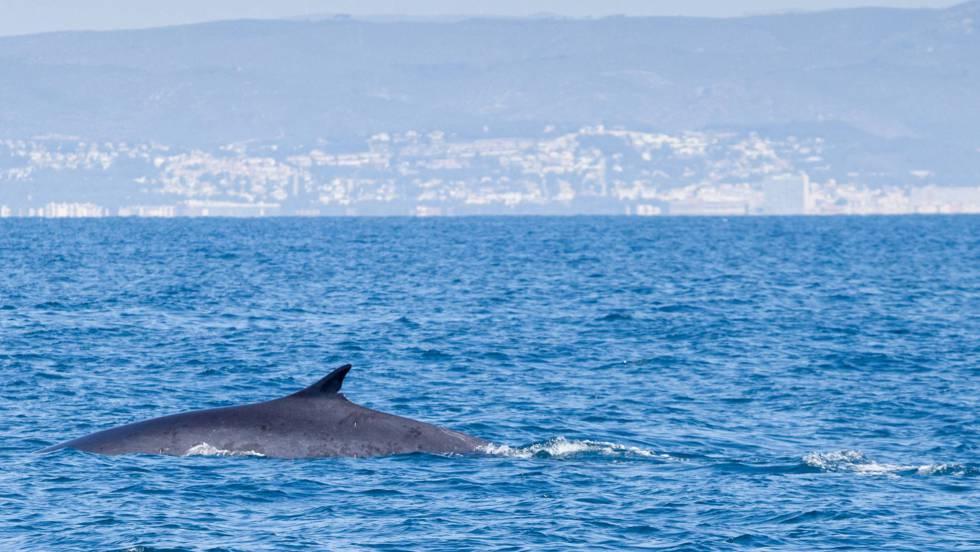 Un gigante marino viene a vernos | Ciencia | EL PAÍS