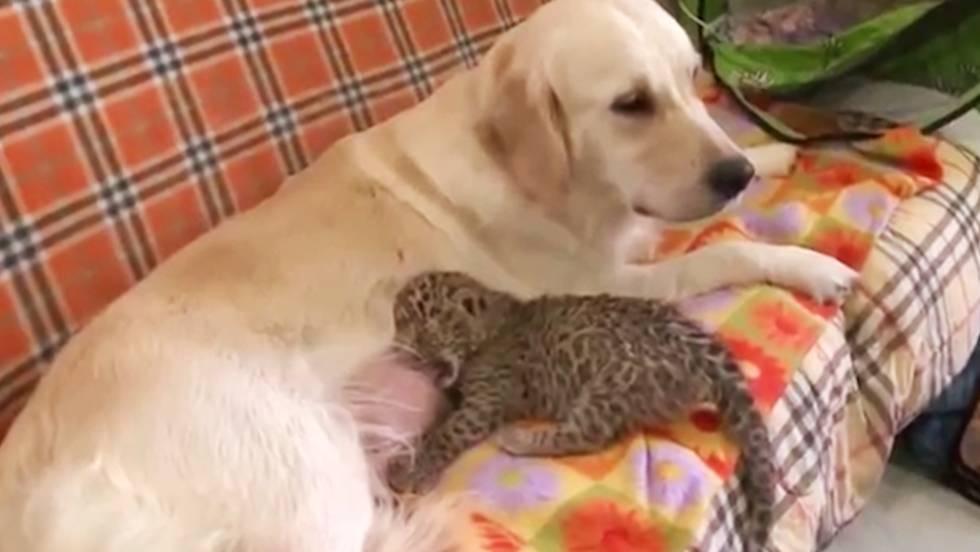 directorio perra besando cerca de madrid