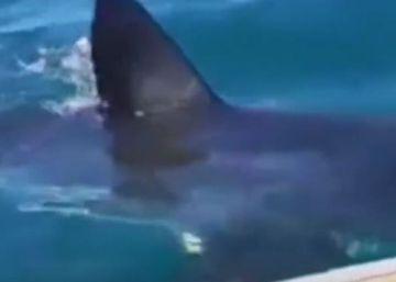 Un gran tiburón blanco asusta a una familia australiana en su día de pesca