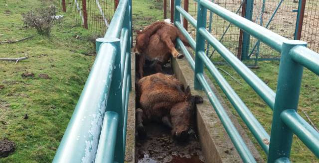 Galicia searches for killers of four wild horses