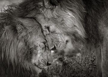 Las imágenes ganadoras del 'Wildlife Photographer of the Year 2018'