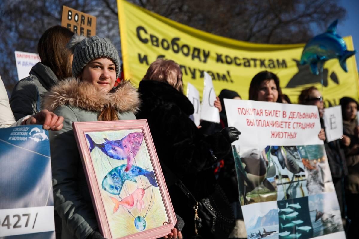 La 'cárcel' de ballenas del lejano Oriente ruso 1552324416_462403_1552325676_sumario_grande