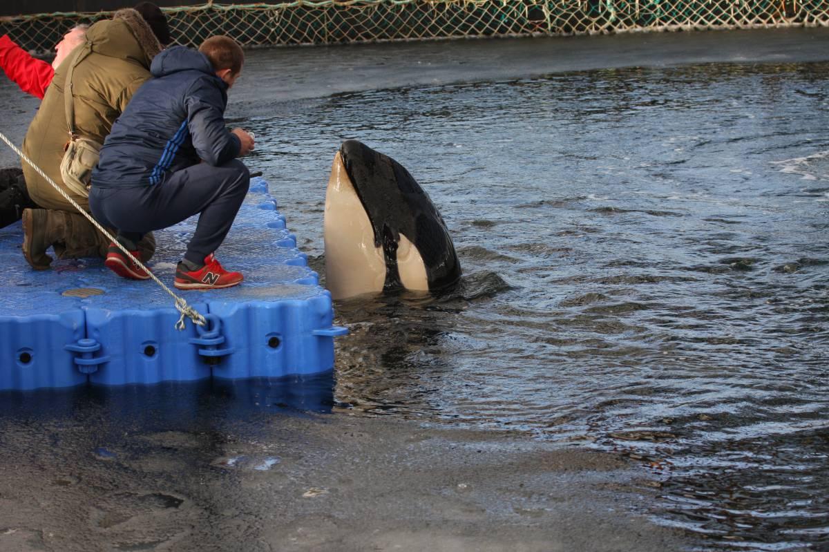 La 'cárcel' de ballenas del lejano Oriente ruso 1552324416_462403_1552375376_sumario_grande
