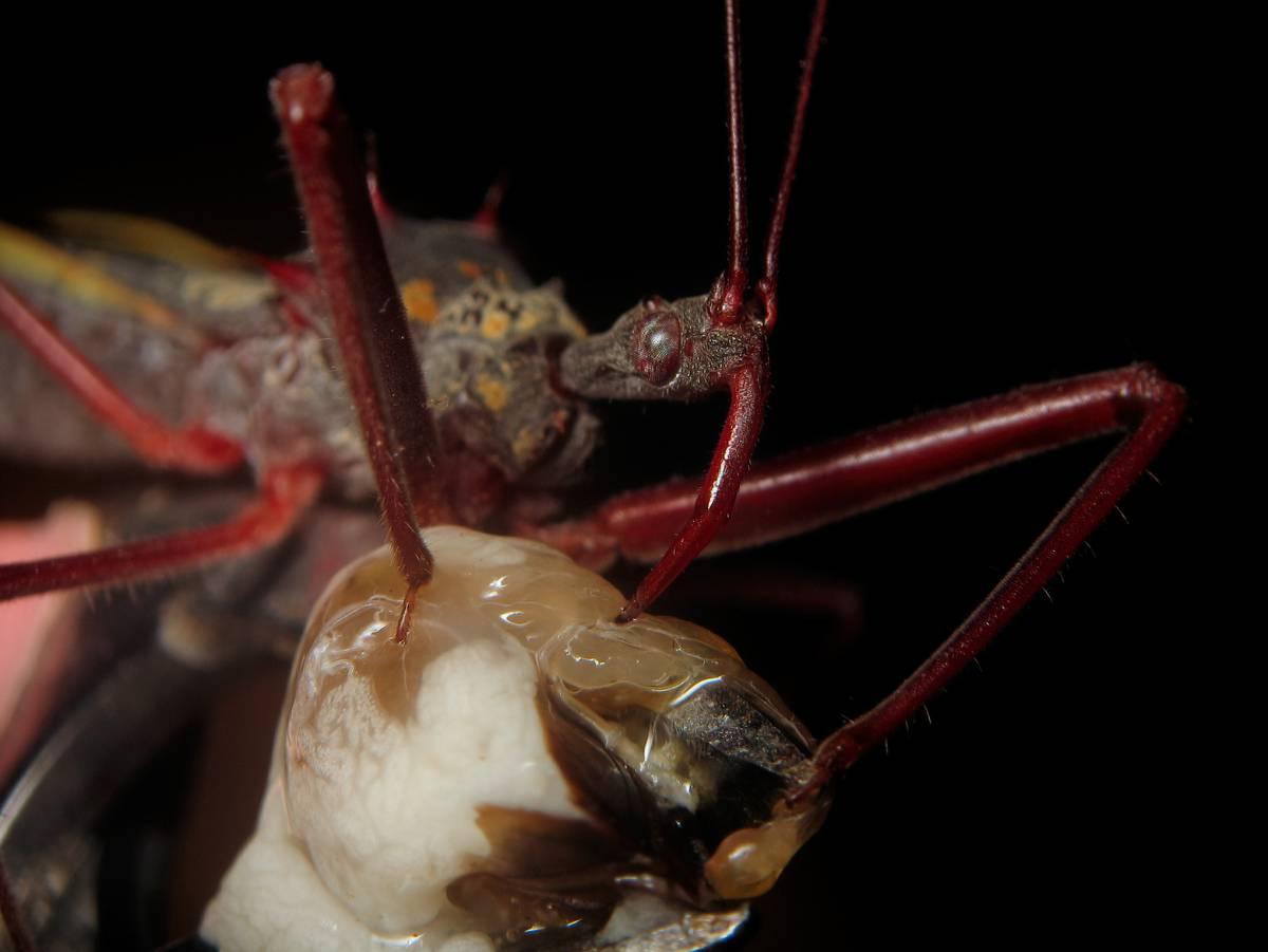 parásito toma el control del cerebro hormiga