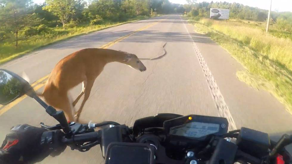 Un motorista accidentado al atropellar a un ciervo