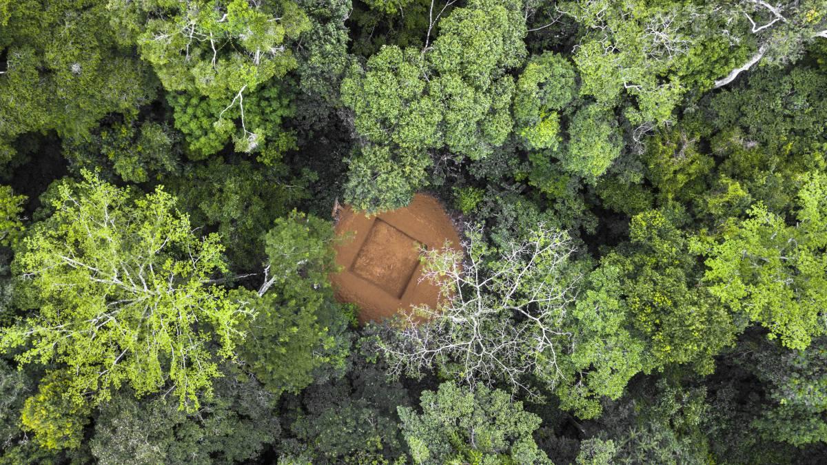 Desconocido y casi intacto: así es el segundo pulmón verde del planeta