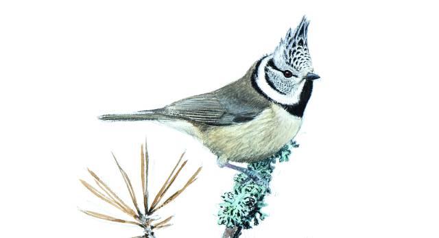 Aventura con el gran pintor de pájaros