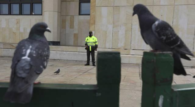 Las dos estrategias de las aves para prosperar en las ciudades