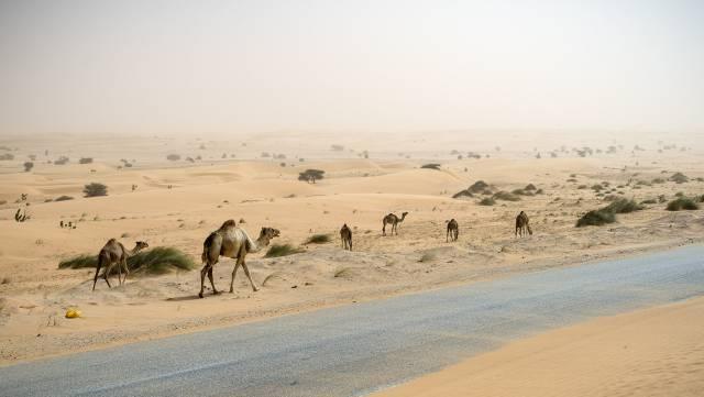 'Road trip' por la carretera del desierto