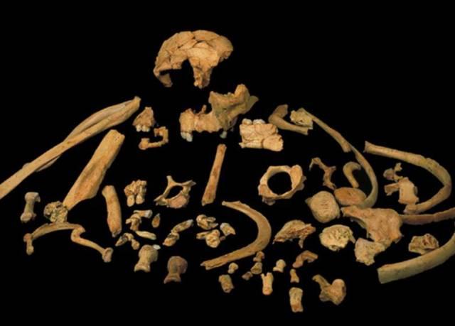 Recuperado el material biológico más antiguo de un fósil humano