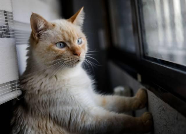 Detectado el primer gato infectado con coronavirus en España