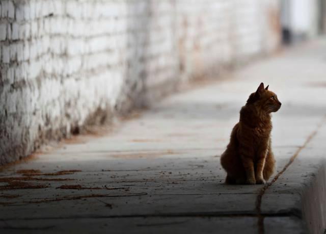 Por qué los gatos viven mal los cambios de rutina