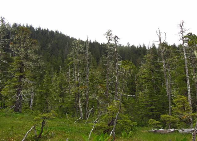 Los árboles son cada vez más jóvenes y pequeños