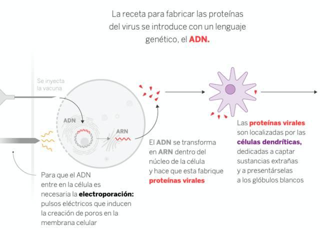 El sueño de la vacuna española contra la covid