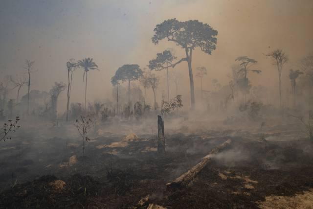 La Amazonia degradada ya es mayor que la deforestada
