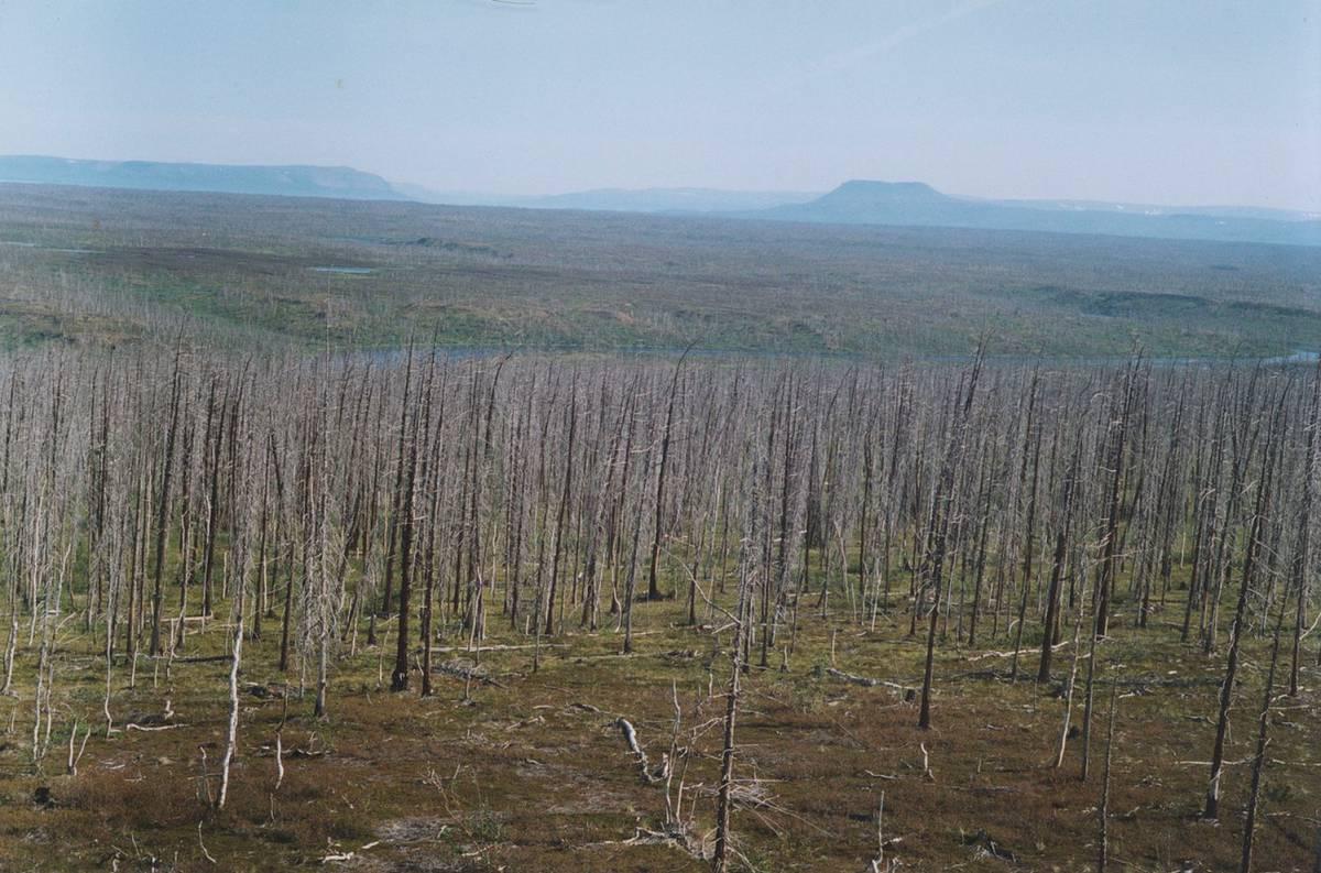 Así muere el bosque más grande del planeta