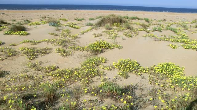 Invasión en el golfo de Cádiz