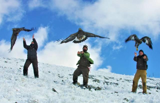 Los desplazamientos de miles de animales muestran cómo ha cambiado la vida en el Ártico
