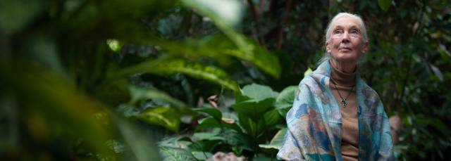 "Jane Goodall: ""Se lo hemos puesto fácil al coronavirus"""