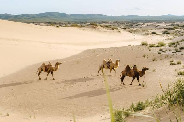 Las tierras de los mongoles ya han entrado en una nueva era climática