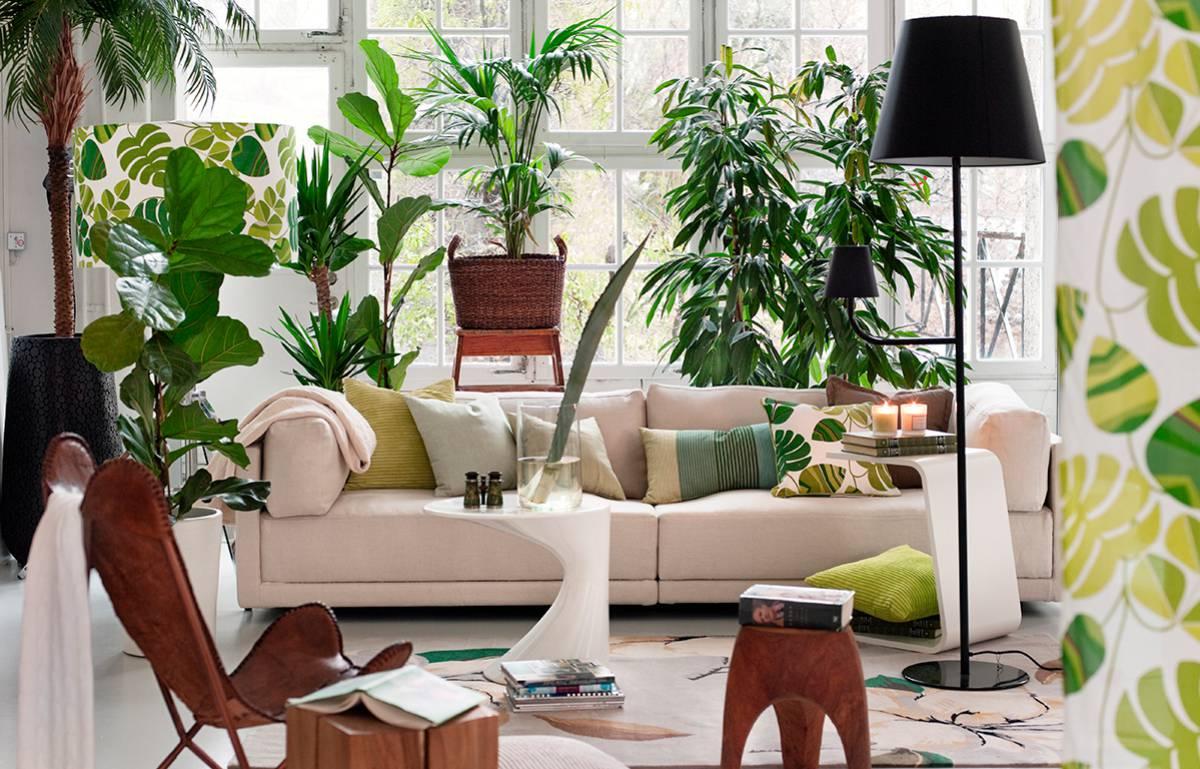 10 plantas de interior resistentes, duraderas y fáciles de cuidar