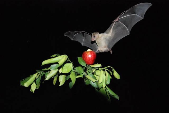 El secreto del murciélago