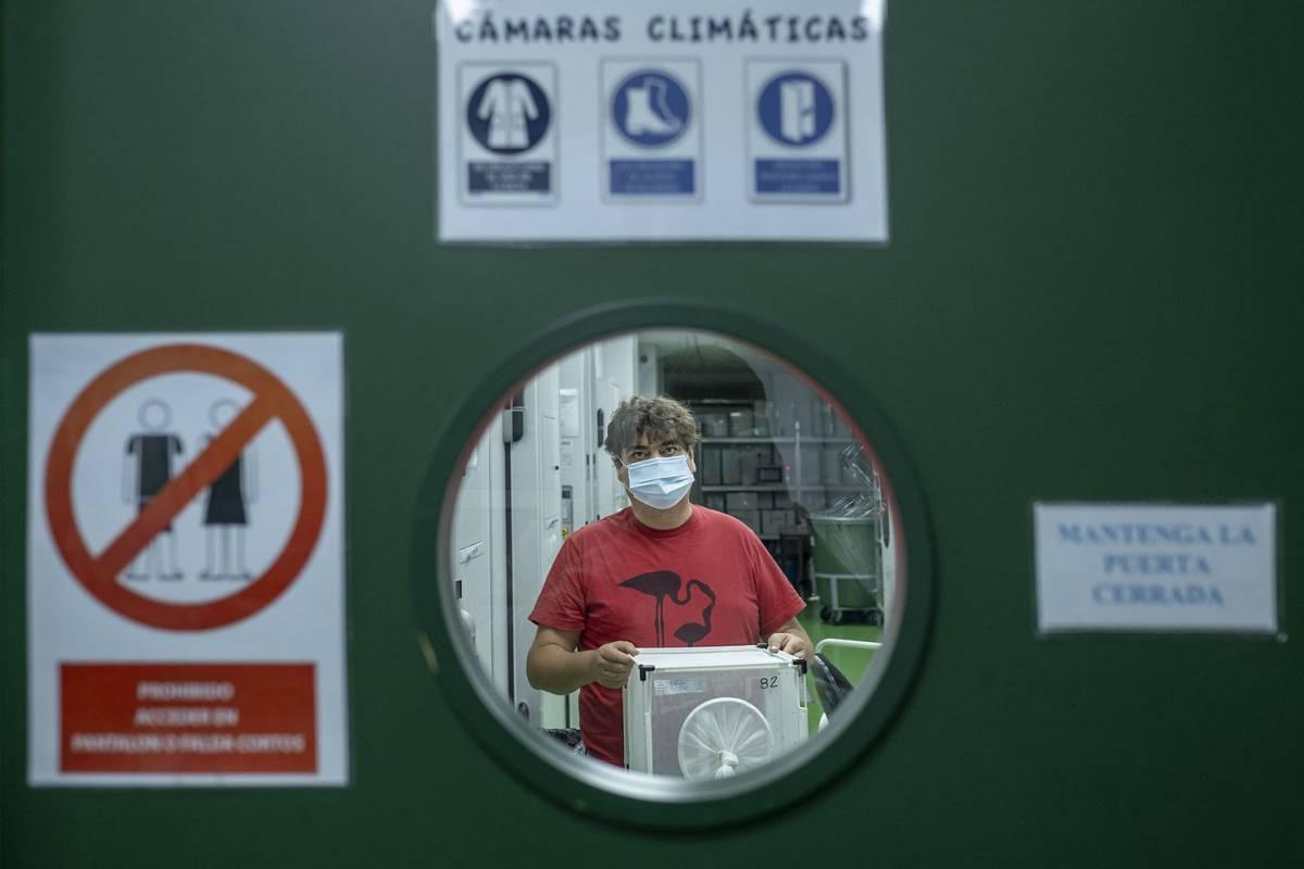 Los mosquitos invasores toman Europa y prefieren la sangre humana