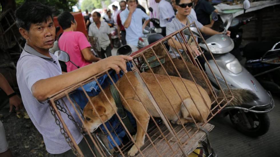 Resultado de imagen para festival de perros en china