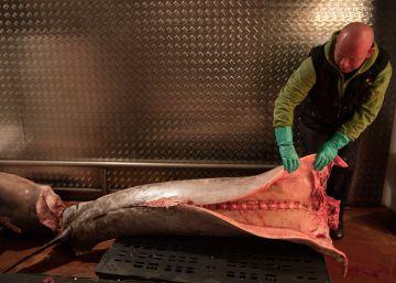 El mercurio del pez espada enfrenta a Roma y Madrid