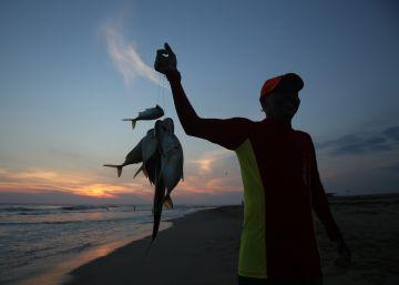 El país de los 11.000 kilómetros de costa redescubre el plato de pescado